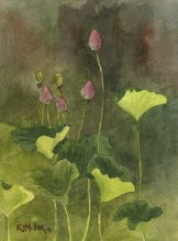 Lotus Buds - Hawaii watercolor by Emily Miller