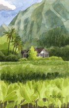 Kauai watercolor artwork by Hawaii Artist Emily Miller - Hanalei Taro Fields