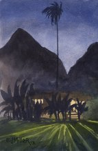 Kauai Artwork by Hawaii Artist Emily Miller - Night at Waimea Plantation Cottages