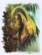 Kauai watercolor artwork by Hawaii Artist Emily Miller - Palm Tree Flowering - Pochade Challenge