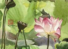 Lotus (Pond) - Hawaii watercolor by Emily Miller