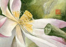 Kauai watercolor artwork by Hawaii Artist Emily Miller - Lotus (Bloom)
