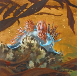 Nudibranch Study - Hawaii watercolor by Emily Miller