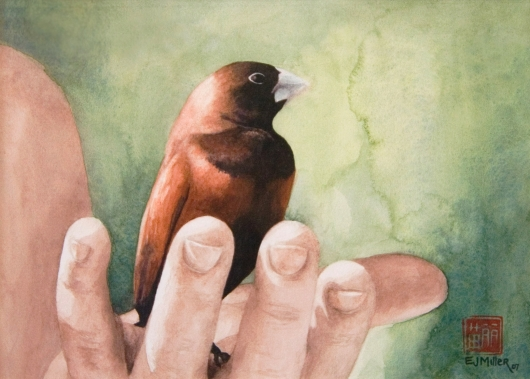 Chestnut Mannikin Kauai watercolor painting - Artist Emily Miller's Hawaii artwork of bird, hand art
