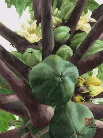Green Papayas Kauai watercolor painting - Artist Emily Miller's Hawaii artwork of flowers, fruit, papaya, tree art