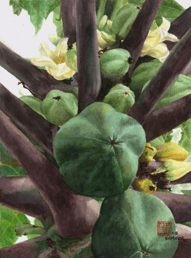 Green Papayas, Flora & Fauna - flowers, fruit, papaya, tree artwork by Emily Miller