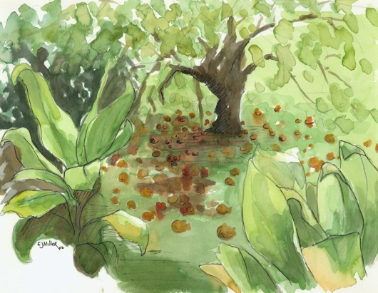 Plein Air, Kilauea Farms Kauai watercolor painting - Artist Emily Miller's Hawaii artwork of tree, fruit, ti, green, garden art