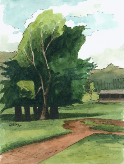 Plein Air, Kokee Meadow Kauai watercolor painting - Artist Emily Miller's Hawaii artwork of kokee, trees art