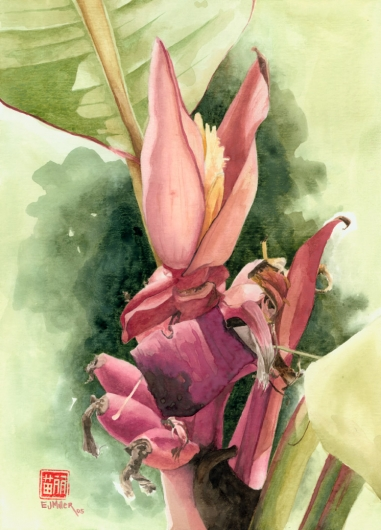 Ornamental Banana Kauai watercolor painting - Artist Emily Miller's Hawaii artwork of fruit, flowers, banana, pink art