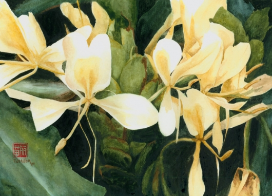 White Ginger Kauai watercolor painting - Artist Emily Miller's Hawaii artwork of flower, ginger, tropical flower, white ginger art