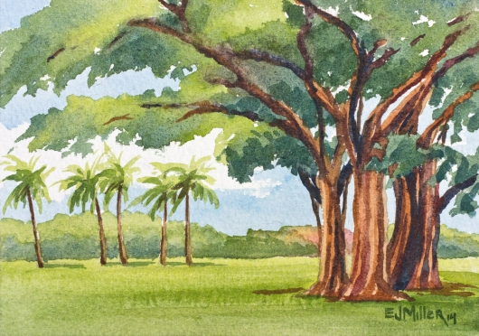 Banyan Tree at Waimea Plantation Cottages Kauai watercolor painting - Artist Emily Miller's Hawaii artwork of banyan, tree, waimea plantation cottages, waimea art
