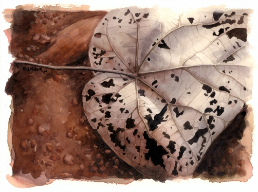 Brown Lace Kauai watercolor painting - Artist Emily Miller's Hawaii artwork of leaf, brown art