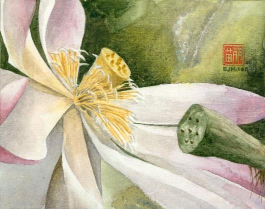 Lotus (Bloom), Flora & Fauna - flower, lotus, NTBG artwork by Emily Miller