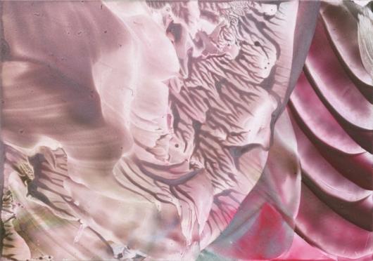 dusky rose, 2013
