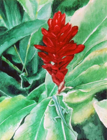 Camouflage Kauai watercolor painting - Artist Emily Miller's Hawaii artwork of lizard, anole, green, red, ginger, flower art