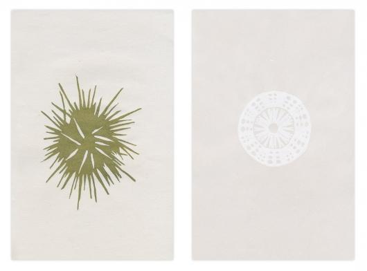 vana - spine / shell, 2014
