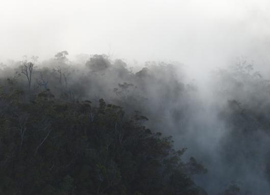 Mountain Mist, 2007