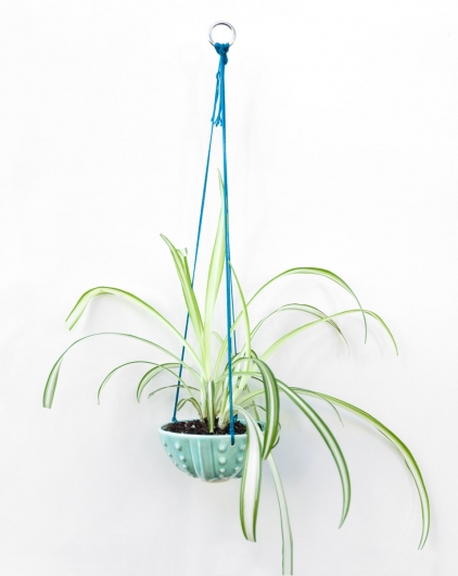 Urchin hanging planter (Aqua), $35  2  available