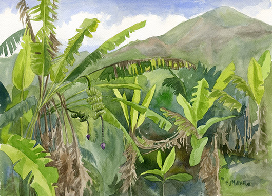 Niumalu Banana Patch Kauai watercolor painting - Artist Emily Miller's Hawaii artwork of  art