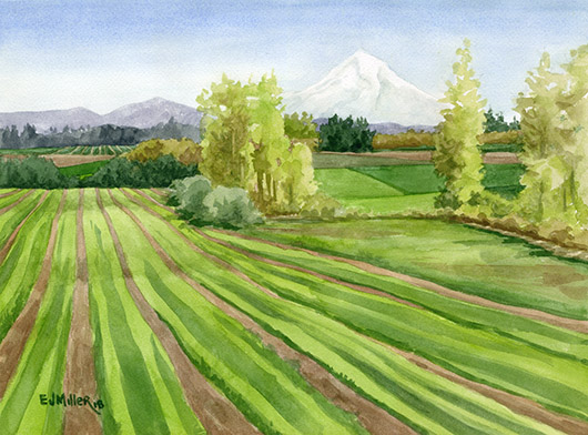 Mt Hood from Tualatin Valley, Countryside - mt hood artwork by Emily Miller