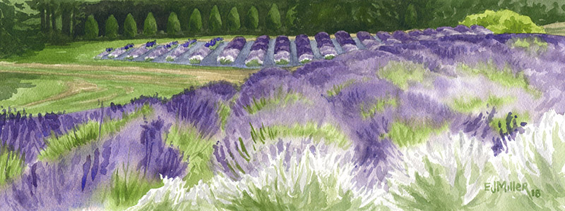 Lavender Grace, Oregon lavender watercolor art by Emily Miller