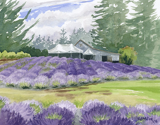 Mist at Wayward Winds Lavender, Oregon lavender painting by Emily Miller