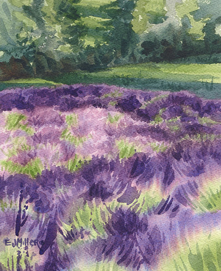 Lavender Study at Sunset, Countryside - oregon, lavender artwork by Emily Miller