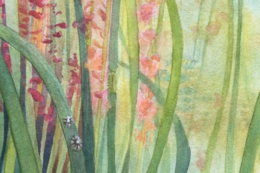Detail, bottom left: eelgrass limpets and eelgrass isopod Eelgrass Meadow, Oregon Coast -  artwork by Emily Miller