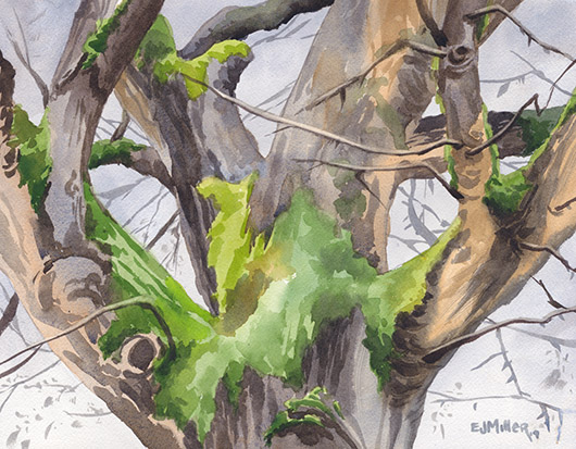 Faithful Oak, St. John's, Portland Oregon watercolor artwork, tree painting by Emily Miller