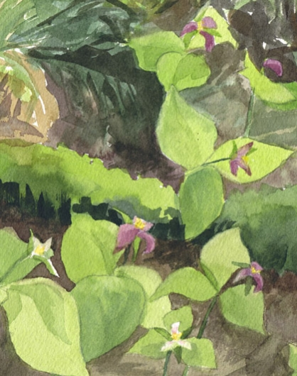 Detail Purple Trillium, Countryside - 2020 flowering artwork by Emily Miller