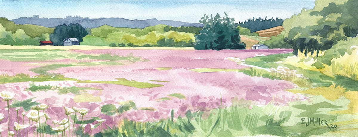 Pink Clover Summer, Countryside - clover artwork by Emily Miller