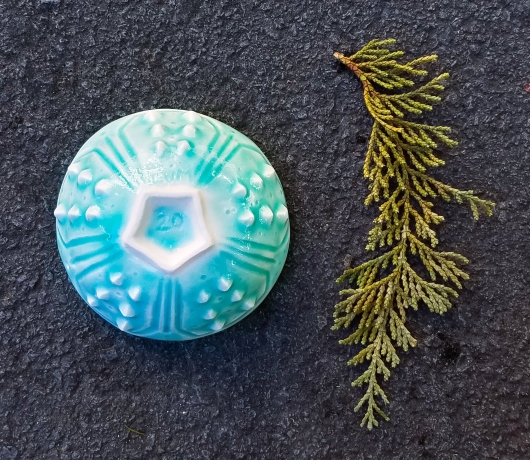 Urchin Mini bowl - aqua, Urchin Bowls -  artwork by Emily Miller