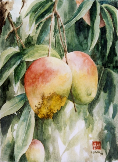 Gorgeous and Rotten - Mangos Kauai watercolor painting - Artist Emily Miller's Hawaii artwork of fruit, mango, tree art